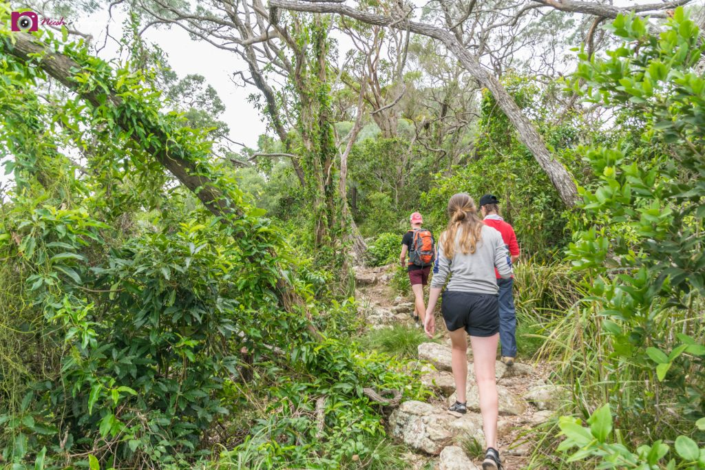 PDHPE Excursion - More Bush Walking